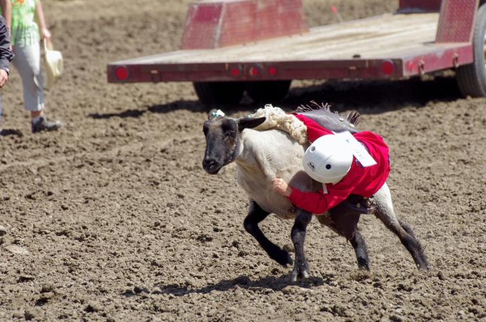 Pictures Sony Creek Horsemen S Association